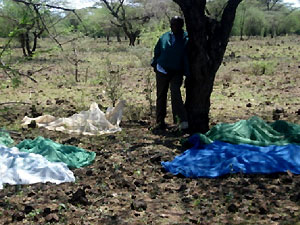Drying of ITNs in Isiolo District's harsh conditions