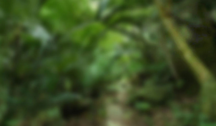 jungle background v2